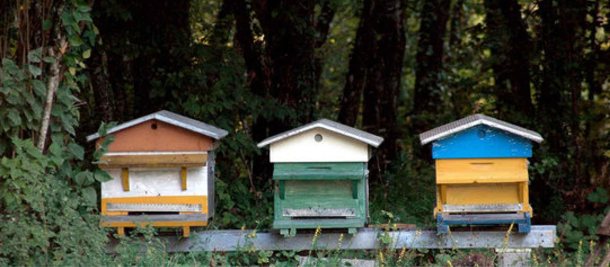 bandeau ruches
